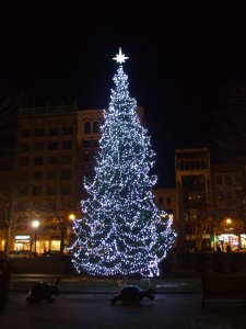 Copley Square Christmas Tree